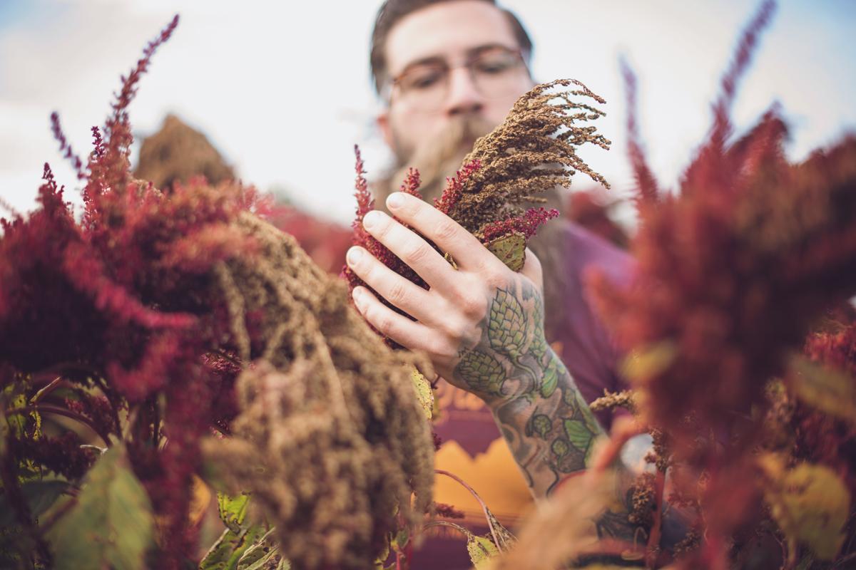Fonta Flora brewer Todd Steven Boera inspects amaranth at Bluebird Farm.