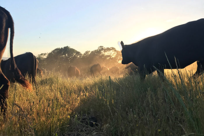 Eat Less Meat' Ignores the Role of Animals in the Ecosystem