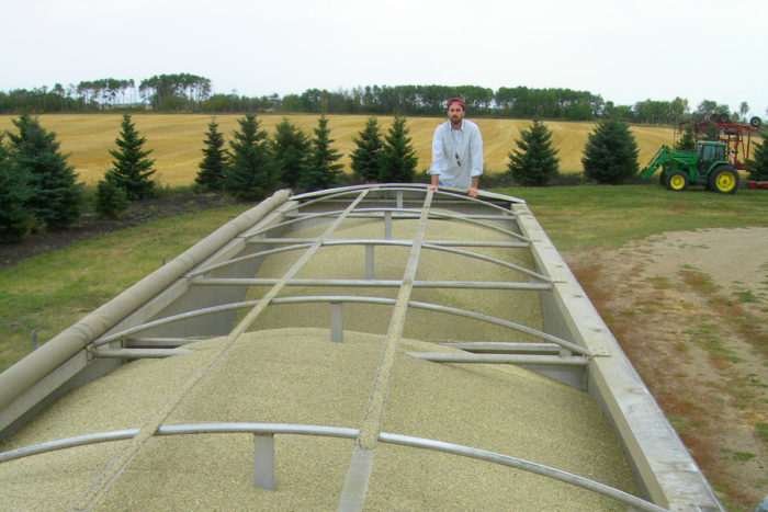 Farmer inspects hemp oilseed harvest. (Photo courtesy of Vote Hemp)