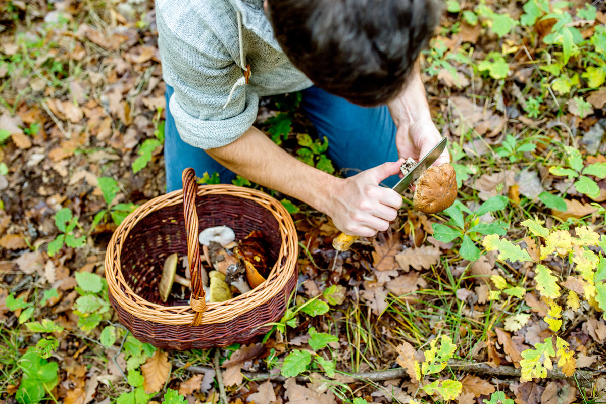 foraging is alive and well in baltimore  can it help fight