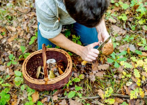 urban foraging for mushrooms