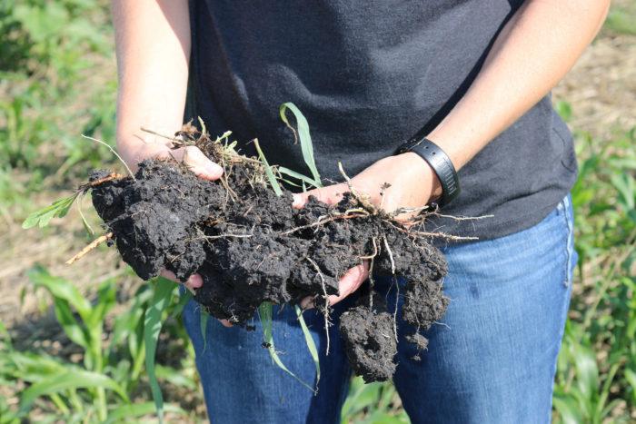 carbon-rich soil