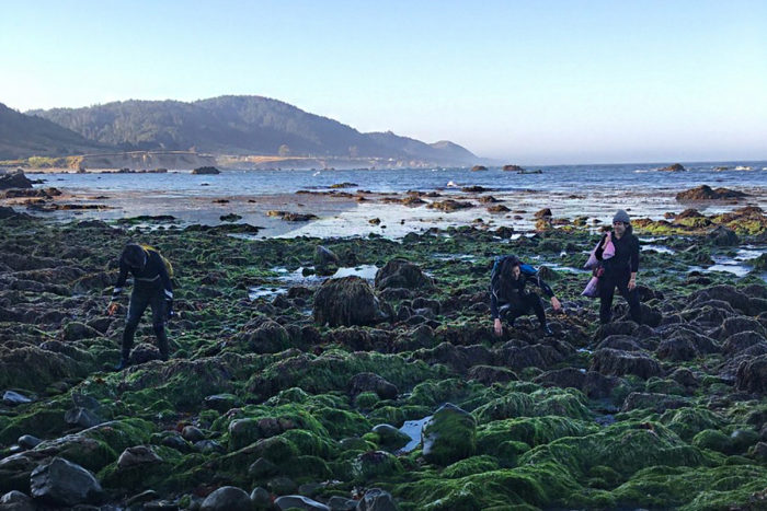 The Salt Point Seaweed team harvesting in Northern California (Photo courtesy Salt Point Seaweed)