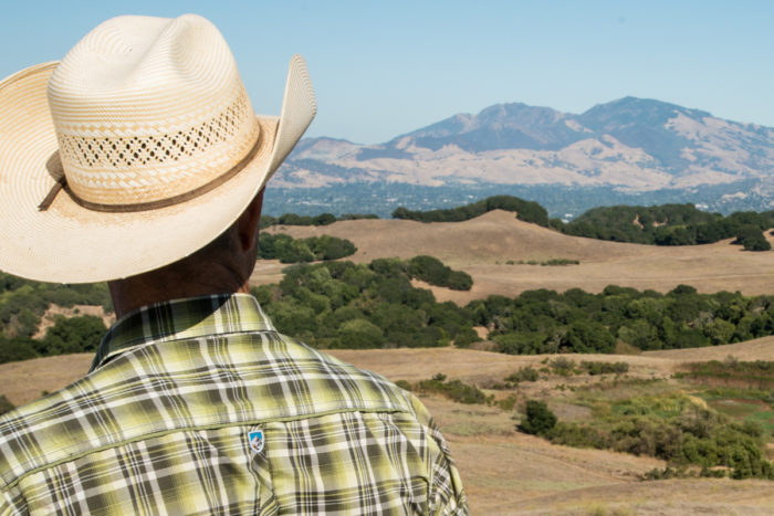 Ned Wood surveying the approximately 4,000 acres of drought-stricken range land in California's Briones Regional Park on which he grazes hundreds of cows. (USDA photo by Lance Cheung.)