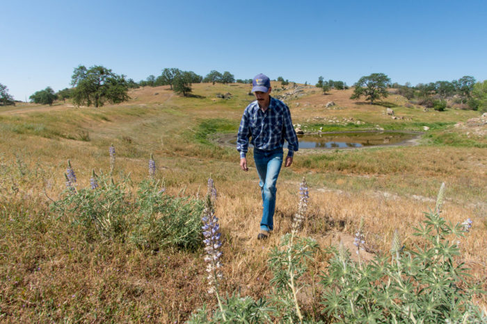 USDA NRCS Range Management Specialist Dennis Dudley walks from what was the waterline for a stock pond at O'Neal Ranch, where owner William O'Neal Jamison requested assistance to make this part of his Black Angus cattle ranch productive throughout the year. (USDA photo by Lance Cheung.)