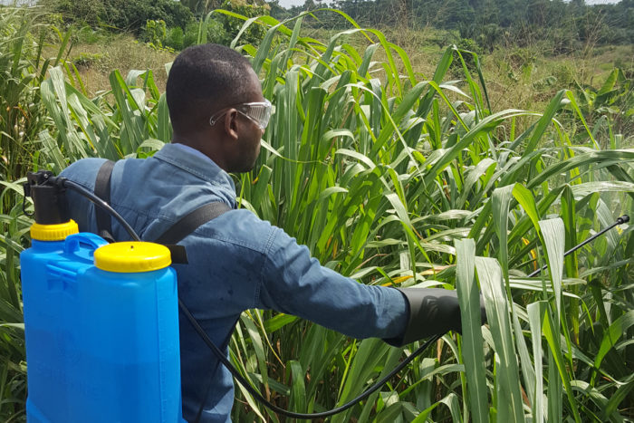 Field test-spraying of glyphosate in Ghana. (Photo credit: Boasiedu)