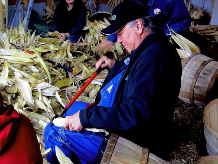 Peter Jemison husking Iroquois White Corn. (Photo credit: Laticia McNaughton)