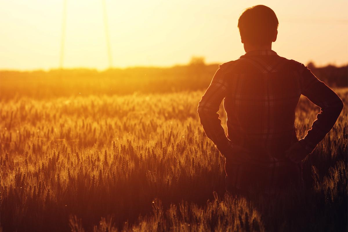 farmer looking at field