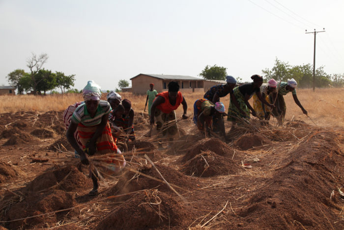 Members of Rural Women's Farmers Association of Ghana (RUWFAG) preparing a field for sowing - Near Lawra, Ghana. (Photo CC-licensed by Global Justice Now)