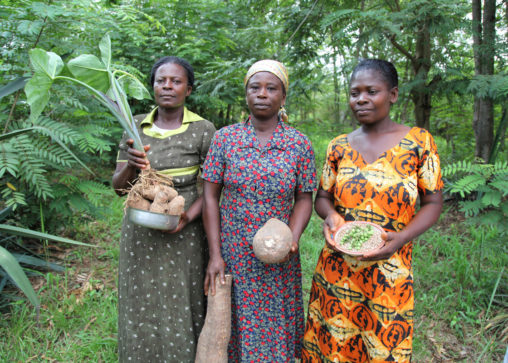Women from the Abrono Organic Farming Project (ABOFAP) showcase their seeds. Near Techiman, Ghana (Photo CC-licensed by Global Justice Now)