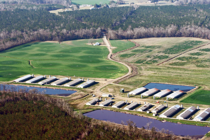 At a North Carolina hog CAFO, lagoons for waste sit on the banks of streams. (Photo courtesy of Waterkeeper Alliance)