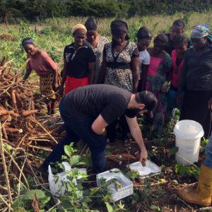 apeel cassava farmers