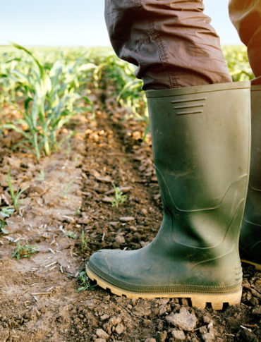 Farmer in rubber boots standing in the field of corn.
