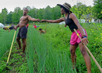 Kevin and Amani tending onions at Soul Fire Farm. (Photo credit: Jonah Vitale-Wolff)