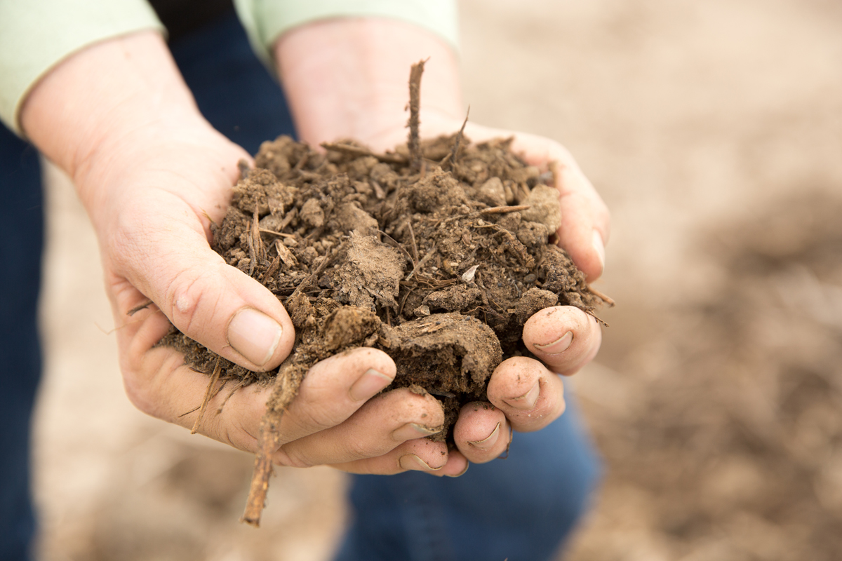 Healthy soils at Bare Ranch. (Photo credit: Paige Green)