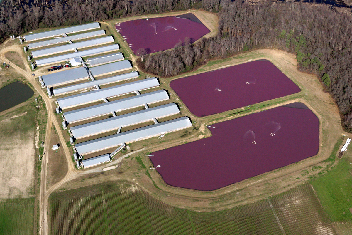 A North Carolina hog CAFO and its waste lagoons. (Photo courtesy of Waterkeeper Alliance)