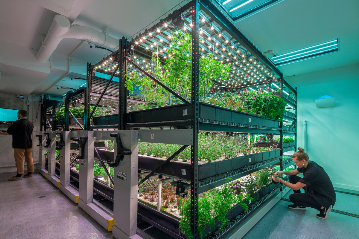 A farm.one indoor farming operation. (Photo courtesy of farm.one)