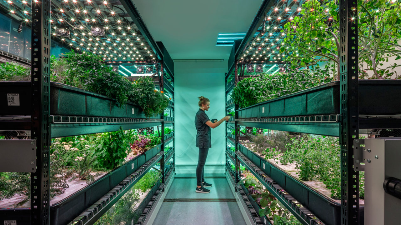 Can Vertical Farms Reap Their Harvest? It's Anyone's Bet. | Civil Eats