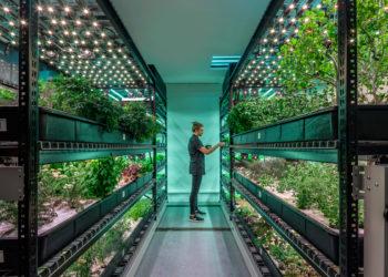 A farm.one indoor farming operation. (Photo courtesy of farm.one)
