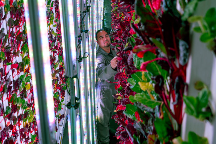 Vertical farming operation. Photo courtesy of Plenty