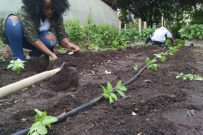 young farmers planting crops