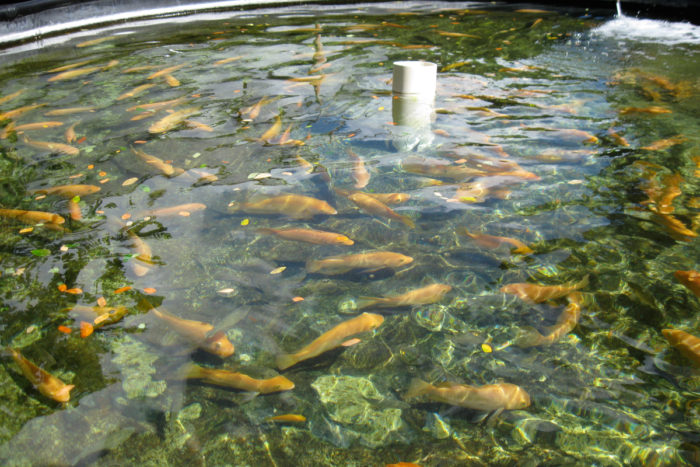 A land-based aquaculture pen. (Photo CC-licensed by Bytemarks)