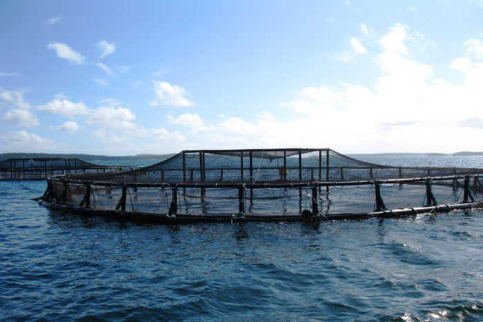 An aquaculture pen off the coast of Maine. (Photo by NOAA
