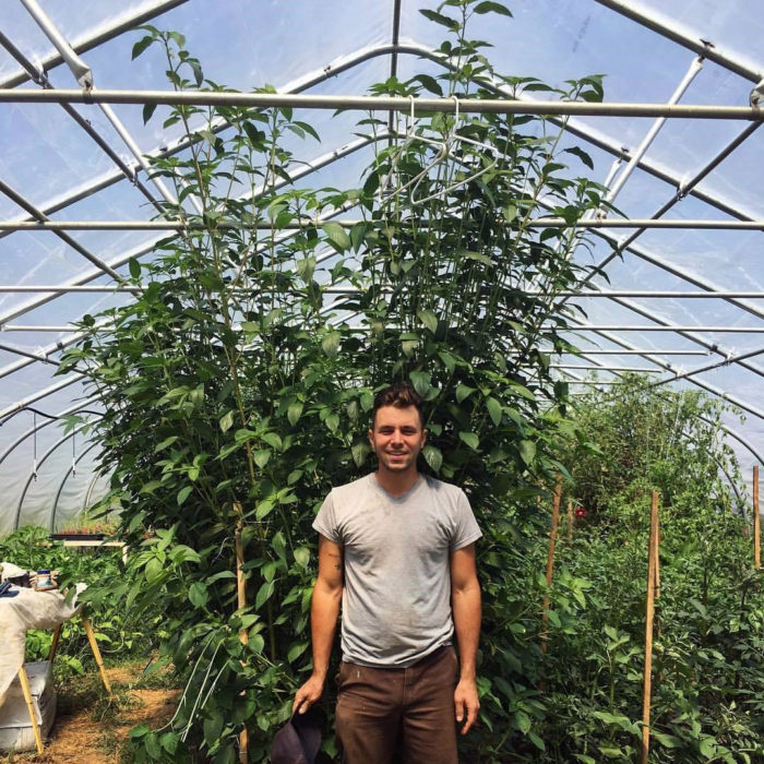Owen Taylor with a Francois Syrian Molokhia plant. (Photo courtesy of Truelove Seeds)