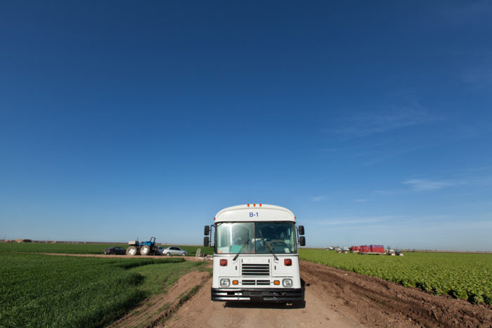 Converted school buses ferry workers into the lettuce fields. Photo © Scott Baxter.