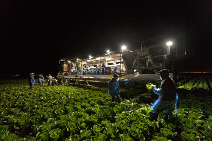 Before sunrise, a 32-person crew works on and around an expansive, mechanized lettuce harvester. Photo © Scott Baxter.