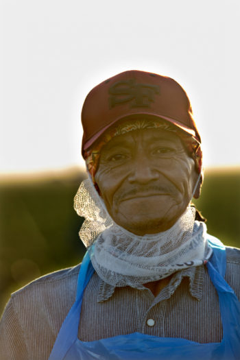 A field worker, who declined to give his name, pauses in the morning light. Photo © Scott Baxter.