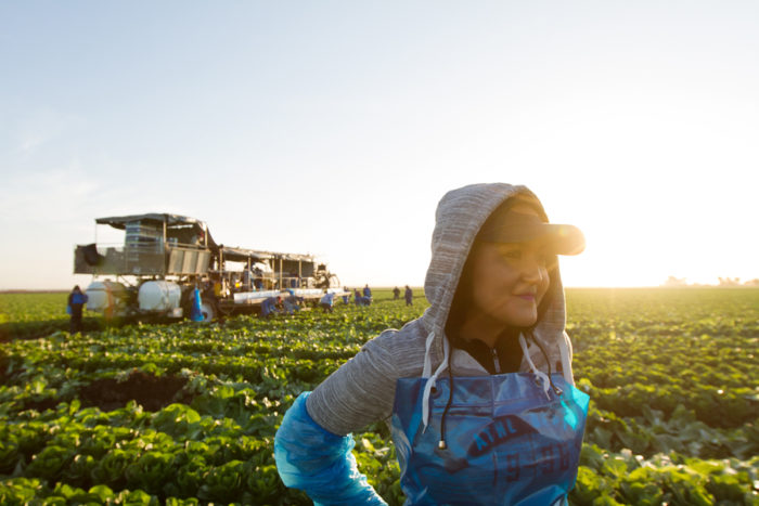 Like most fieldworkers, Odalis Aguilar starts picking before daybreak. Photo © Scott Baxter.