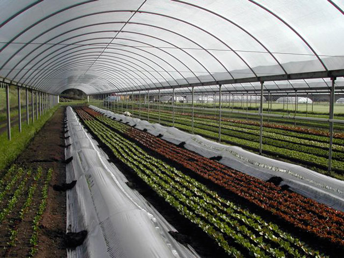 A hoop house at Star Route Farms in Bolinas. (Photo courtesy of Star Route Farms)