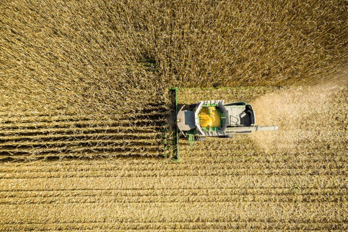 Some researchers suspect that U.S. farm subsidies supporting the production of corn (pictured here) and other crops result in processed foods that are significantly cheaper—but less nutritious—than other options. (photo credit: Edwin Remsburg/Getty Images)