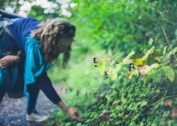 woman foraging for edible weeds