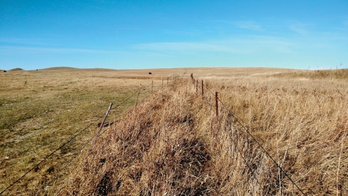 This fence line comparison shows the difference between a pasture belonging to a neighbor that has been grazed all season long, and one of Brown's pastures that was grazed using an adaptive multi-paddock approach.