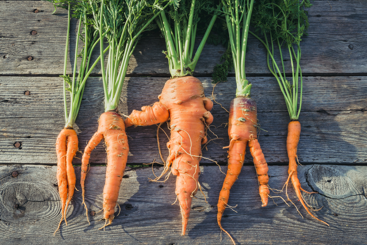 food waste ugly carrots together