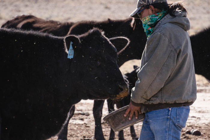 Jonathan Pahi feeding the cattle. (Photo © Thosh Collins)