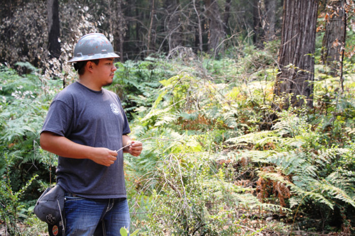 As a summer intern on the Six Rivers Forest, Jonathan White, a student at Salish-Kootenai College in Montana, is helping to monitor how plants return to this area, burned in 2016 as a Forest Service and Karuk Tribe research plot.