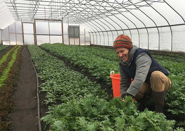 Madeleine Banulski of Sun Sprout Farm harvesting in the high tunnel. (Photo courtesy of Chester Ag Center)
