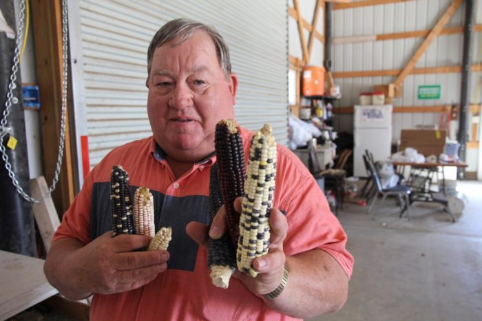 Art Tanderup displays several traditional varieties of corn he has grown on his farm in the last five years.
