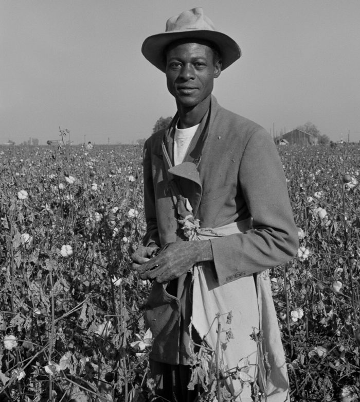A Black migrant farmworker picking cotton in the field. Photo © Ernest Lowe
