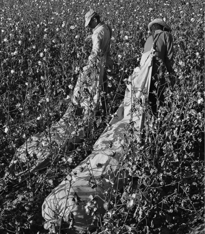 Two Black migrant farmworkers in the cotton fields. Photo © Ernest Lowe
