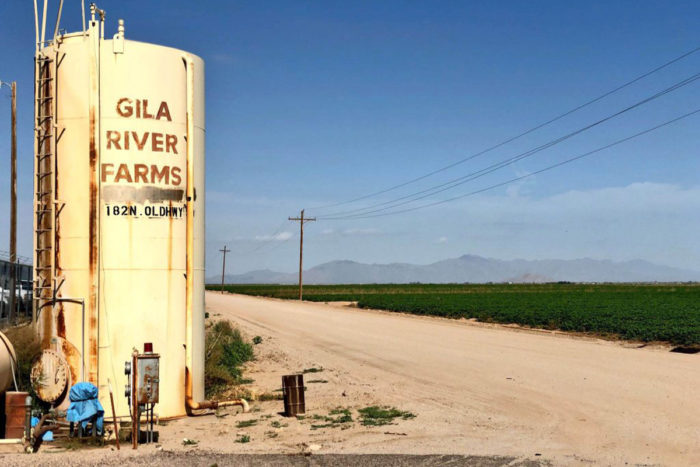 Gila River Farms will celebrate its 50th anniversary this year. (Photo By Tayler Brown/Cronkite News)