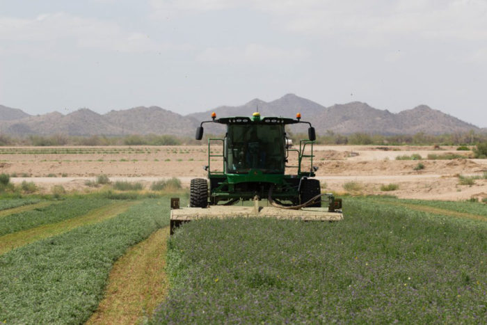 A Gila River Farms worker harvests alfalfa, a main cash crop. (Photo By Tayler Brown/Cronkite News)