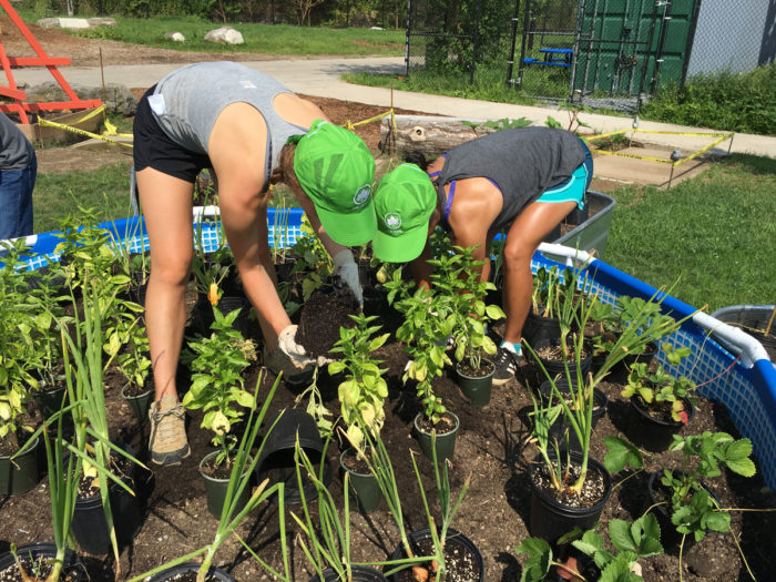 Members of NYC Parks' 5 Borough crew helps plant demonstration beds at the Bronx Foodway. (Photo by Nathan Hunter)
