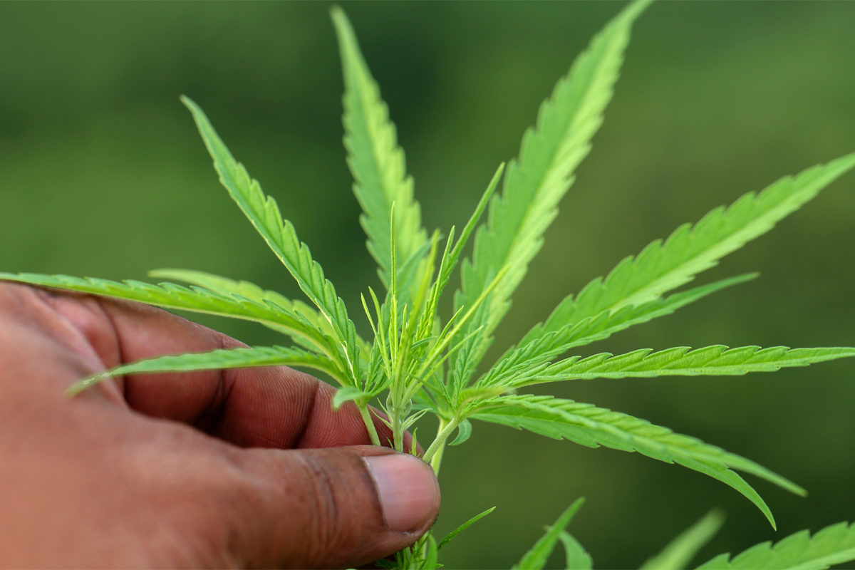 Congress Will Likely Legalize Hemp in the Farm Bill  It Should Also