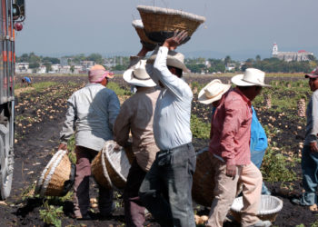 Campesinos Working in Tlalquiltenango, Morelos, Mexico. (Photo credit: Joseph Sorrentino / iStock)
