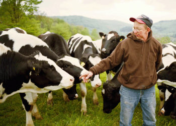 A farmer with his dairy cows. Photo courtesy of American Farmland Trust.