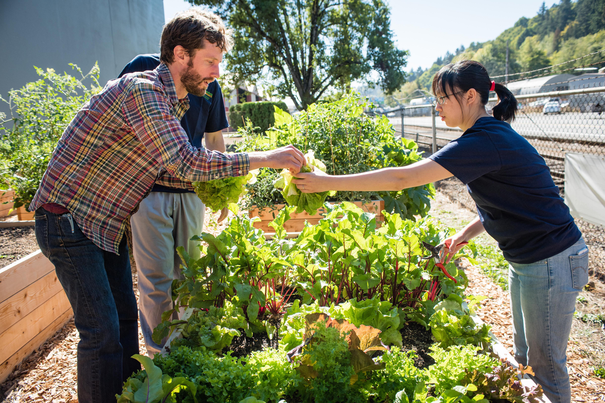 people harvesting produce from an edible landscape garden
